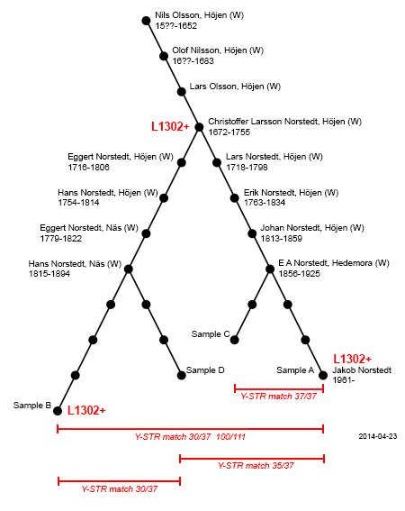 Avvikelser mellan Höjen-grenar